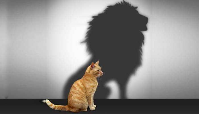 mindset progressivo autoconfiança